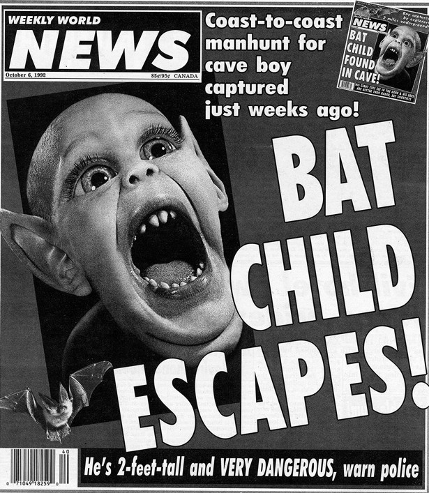 baby gray bat