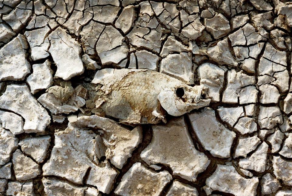 Salton sea toxic