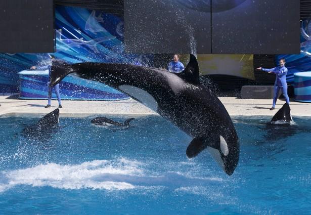 SeaWorld ends its Shamu show