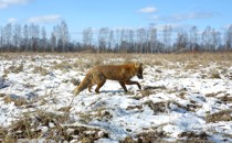 The Creatures That Remember Chernobyl