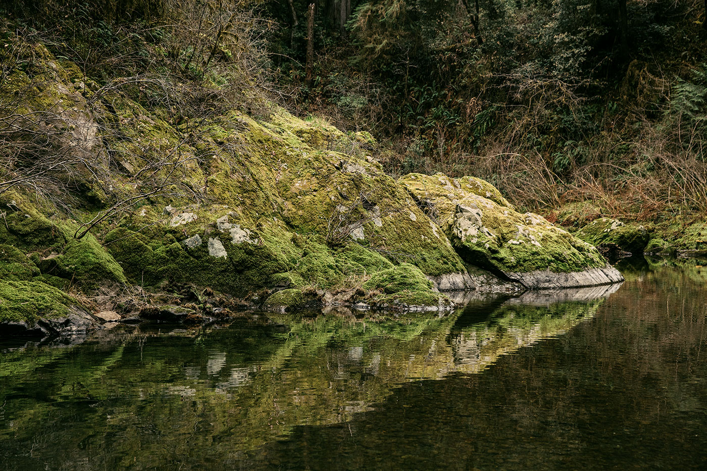 A moss-covered rock along the Smith River in Jedediah Smith Redwoods State Park in Northern California