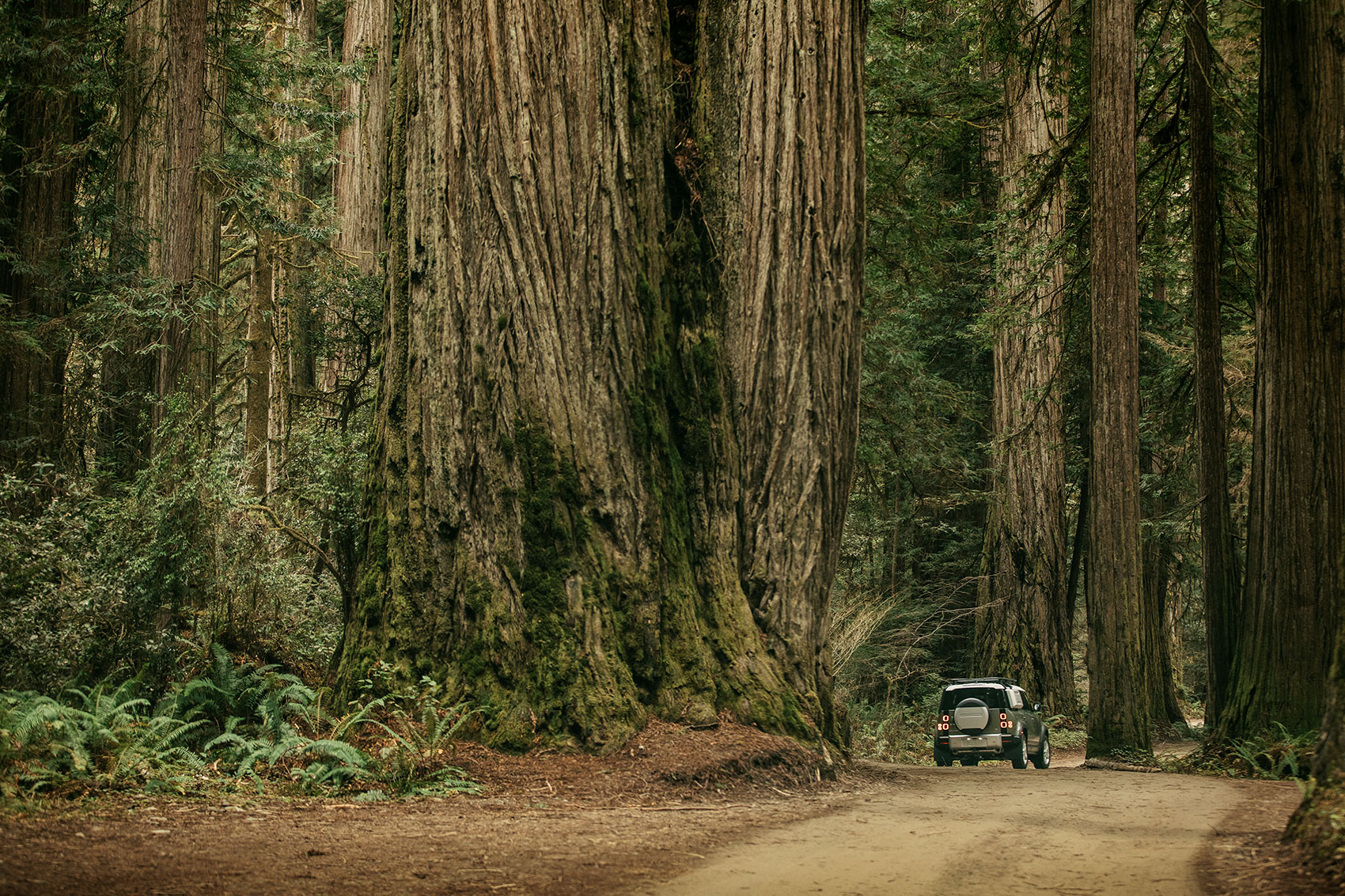The new 2020 Land Rover Defender 110 amongst the giant redwoods