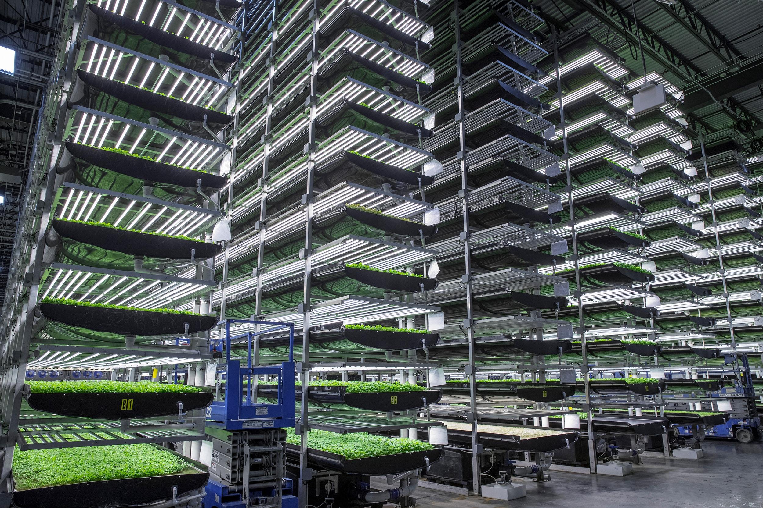 worlds largest indoor vertical - photo #18