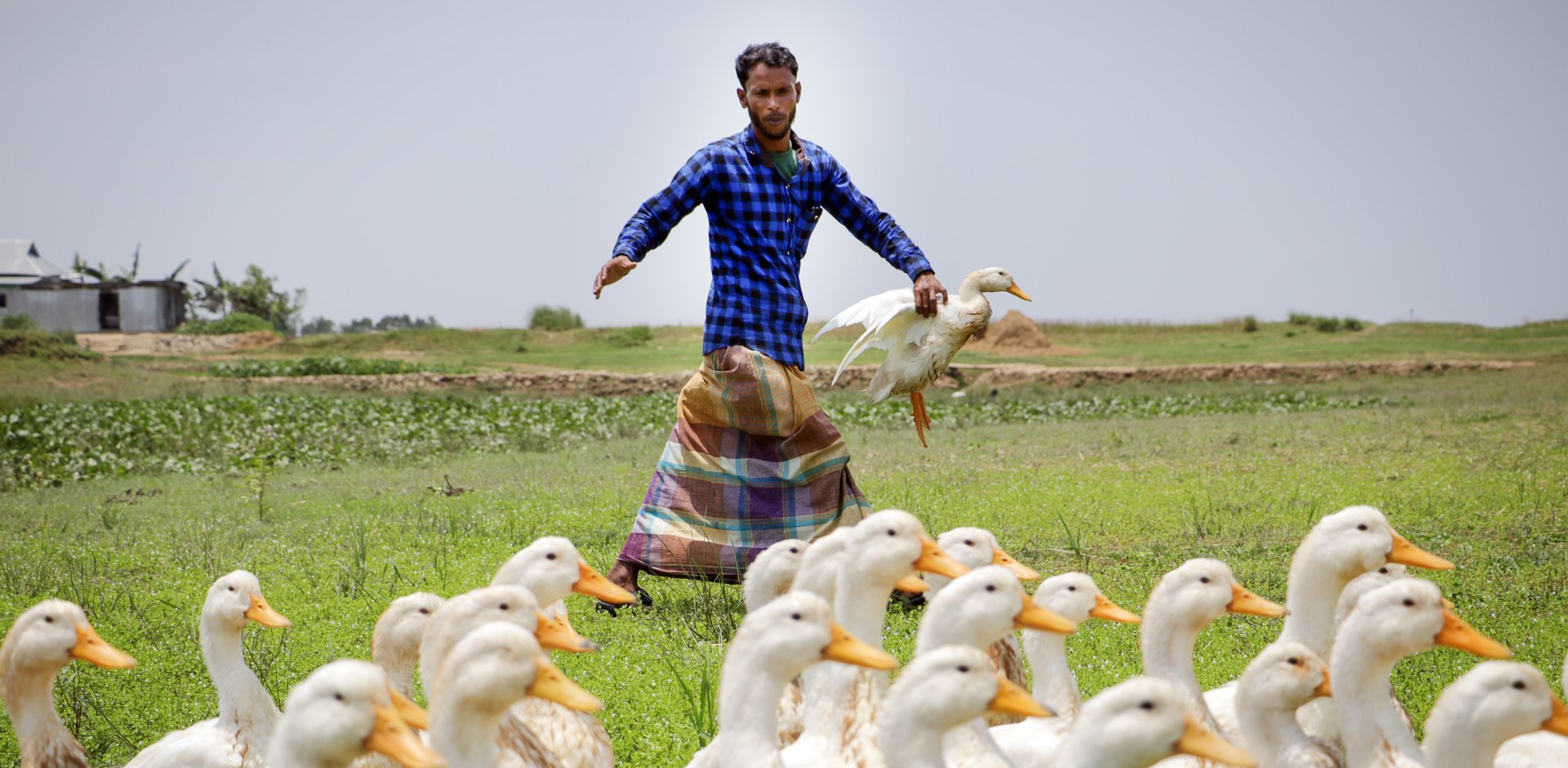 Bangladesh Farmers Are Raising Ducks to Adapt to Climate