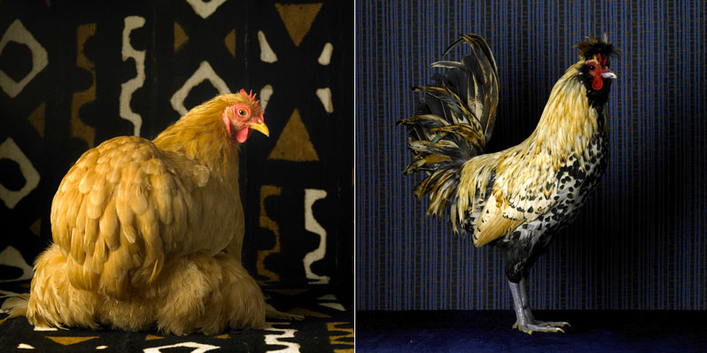 fairestfowl03.jpg