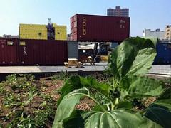 DeKalb Market with garden (via DeKalb Market)
