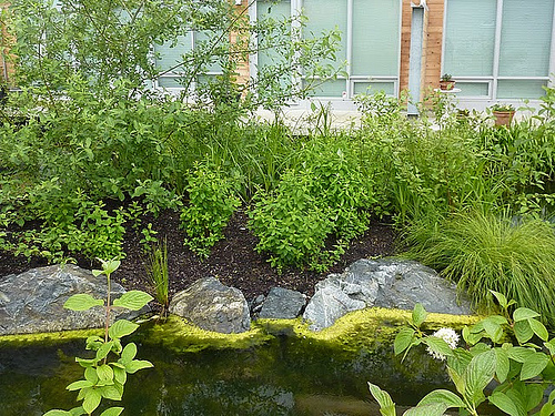 landscaping at Dockside Green (by: Joanna Pettit/Up on Haliburton Hill)