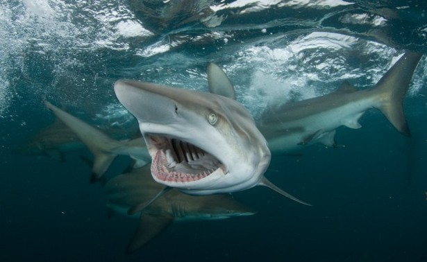 The Sublime Otherness Of Sharks The Atlantic
