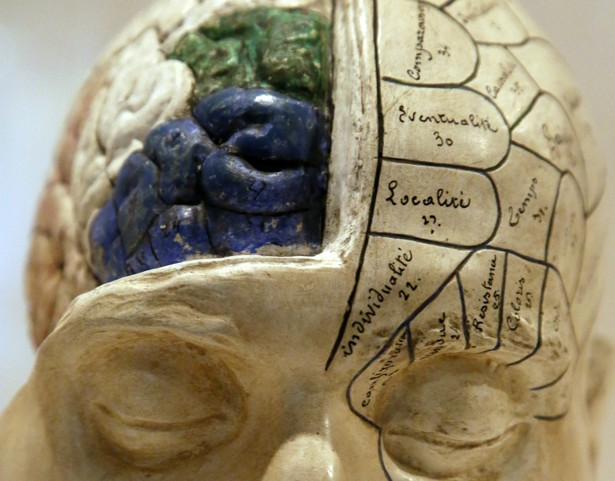 Why do scientist say we only use 10% of our brain? How do they know?
