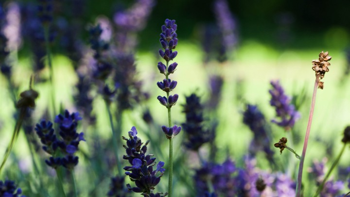 The Allergens In Natural Beauty Products The Atlantic
