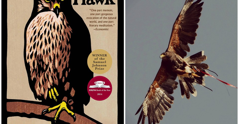 In Helen Macdonalds H Is For Hawk Grief Takes Flight The Atlantic