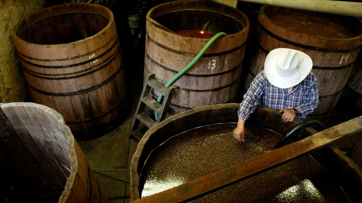 How Tequila Went From Mexican Farms to American Frats - The