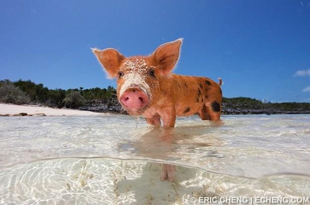 bay of pigs essay bay of pigs essay bay of pigs essay essay years after his essay essay about paper