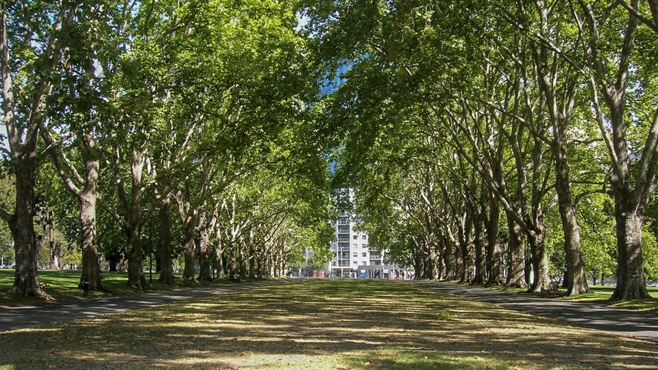 https://cdn.theatlantic.com/assets/media/img/mt/2015/07/new_trees/lead_960_540.jpg?1522839206