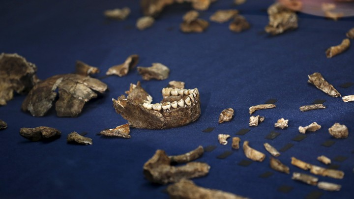 best carbon dating to determine age of early hominids