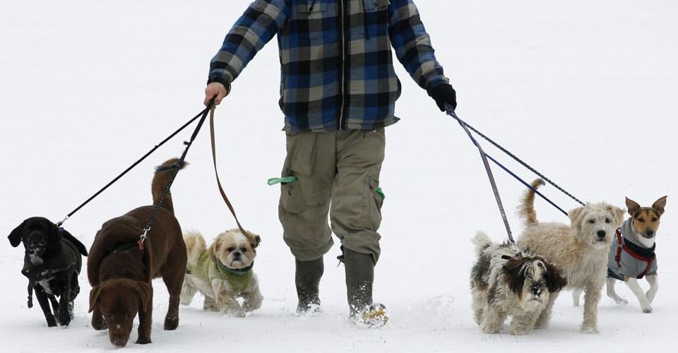 What I Learned From A Decade As A Professional Dog Walker