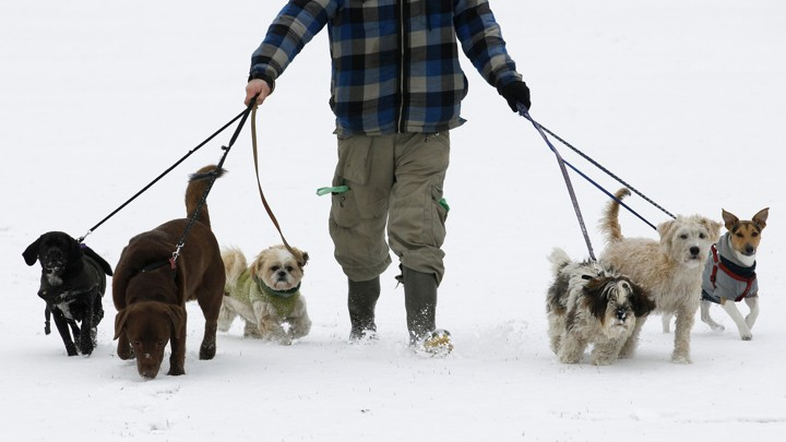 Image result for dog walker