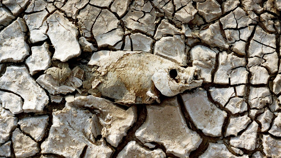 The Salton Sea Californias Largest Lake Is Now a PublicHealth