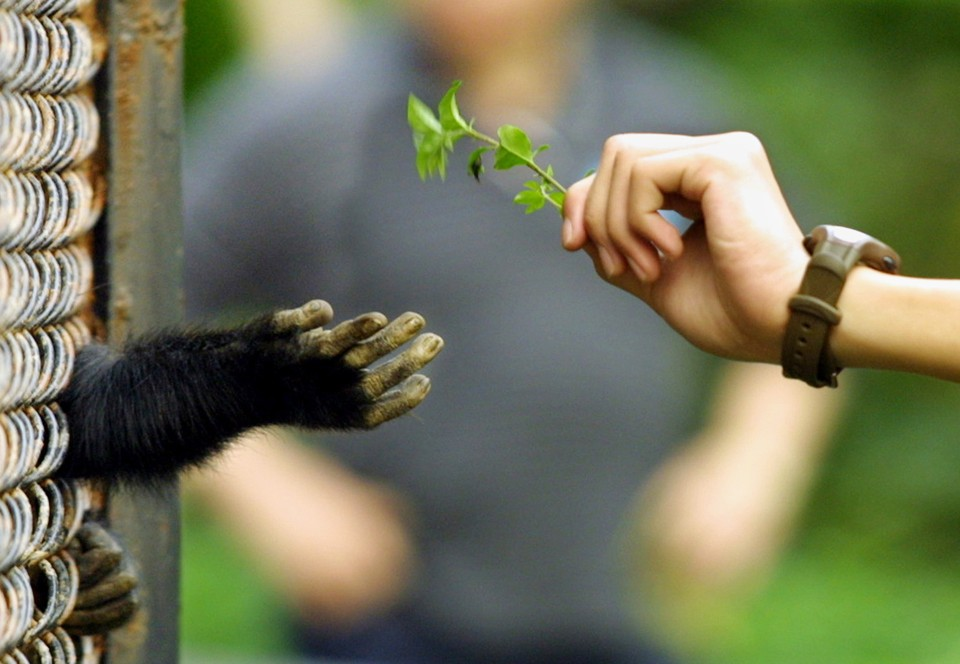 the evolutionary development of morality in primates Dear science: why aren't chimpanzees evolving into humans skip  to a  question about evolution: why aren't apes evolving into humans.