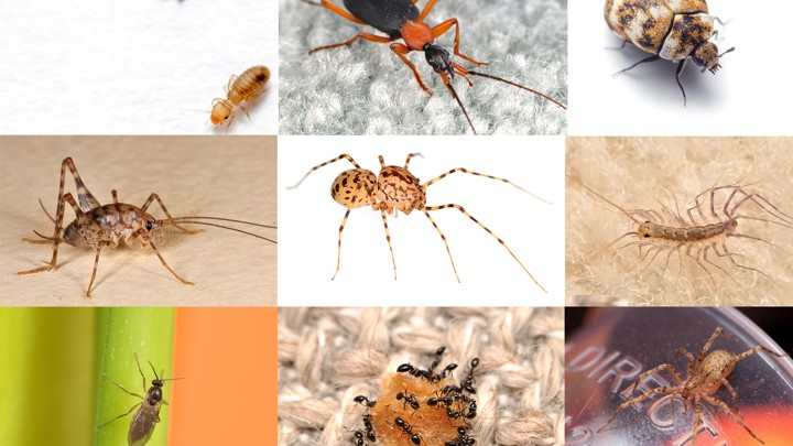 Census Reveals Just How Many Bugs Share the American Home
