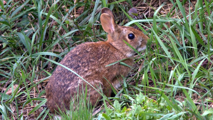 Monitoring Rabbits' Population Growth Through Poop - The