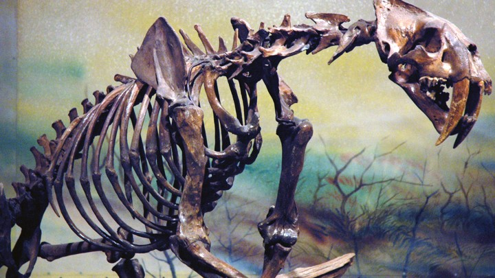 Relative hookup of fossils is based on what