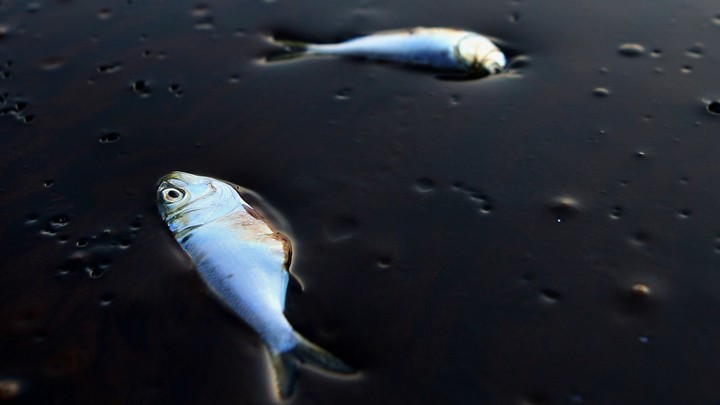 Federal Judge Approves $20 Billion Settlement in BP Oil ...