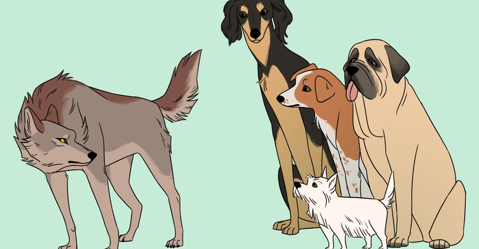 The Origin of Dogs: When, Where, and How Many Times Were