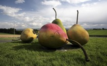 The Push to Make Pears the New Apples