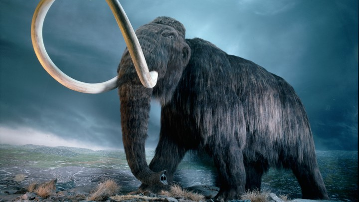 Tokeo la picha la mammoths