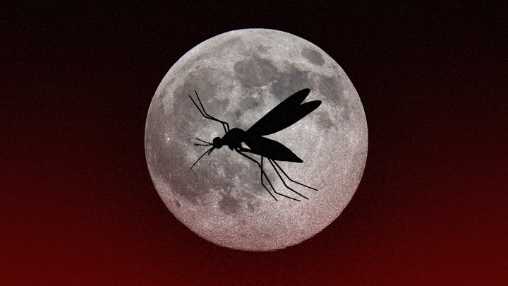 Image result for mosquito  undead