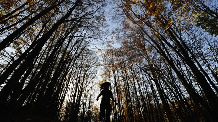 A child runs through a forest of tall trees.
