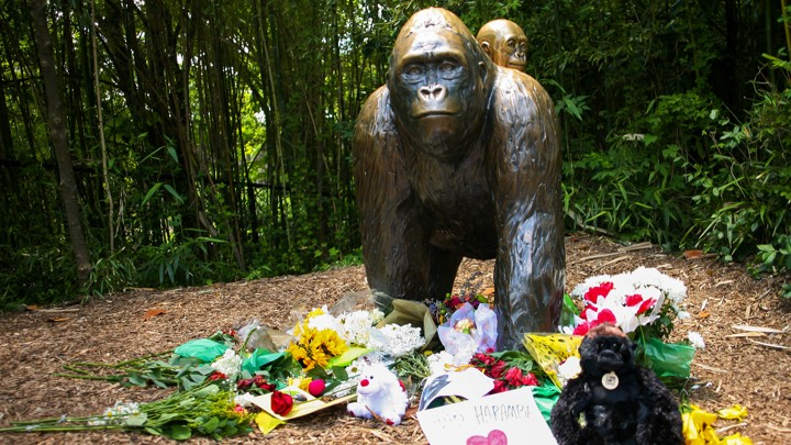 how harambe became the perfect meme the atlantic