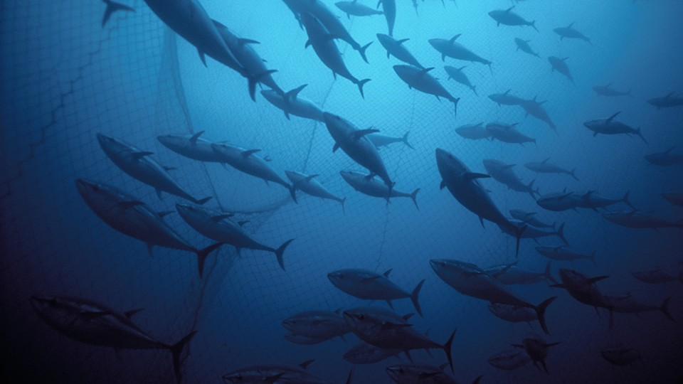 The New Tools For Fish Counting Artificial Intelligence Submarines