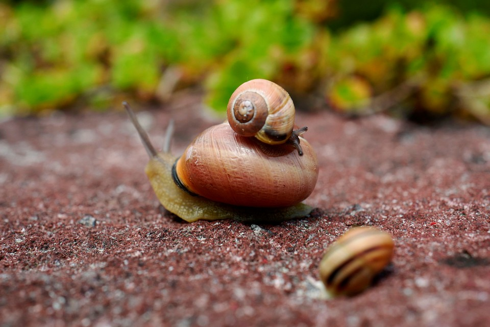 the love song of jeremy the leftcoiled snail the atlantic