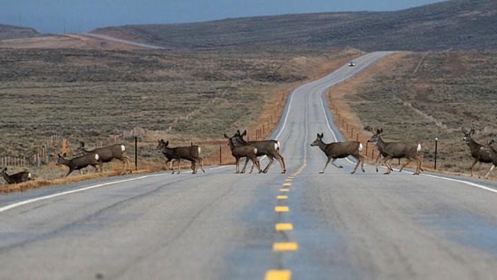 America S Wildlife Corridors Are In Danger The Atlantic