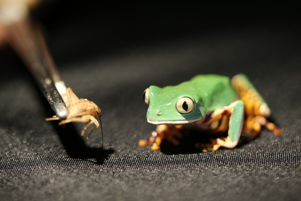 Why Frog Tongues Are So Sticky  The Atlantic