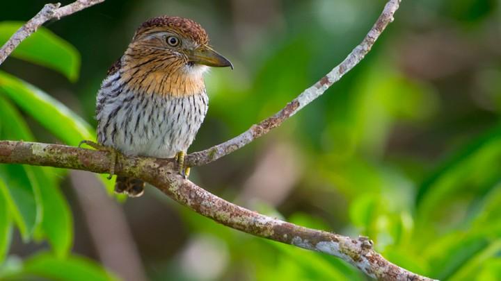 Avian Athletes Who Start Their >> The Factious High Drama World Of Bird Taxonomy The Atlantic