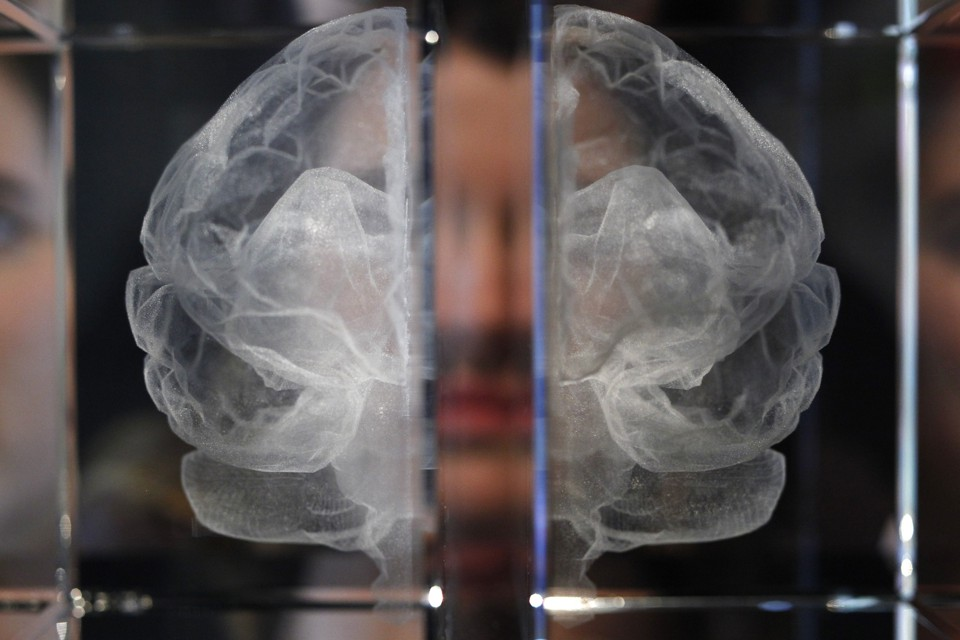 A glass etching of a brain