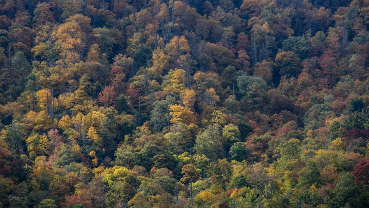 Autumn Colors In Great Smoky Mountains National Park Near Cherokee North Carolinageorge Rose Getty