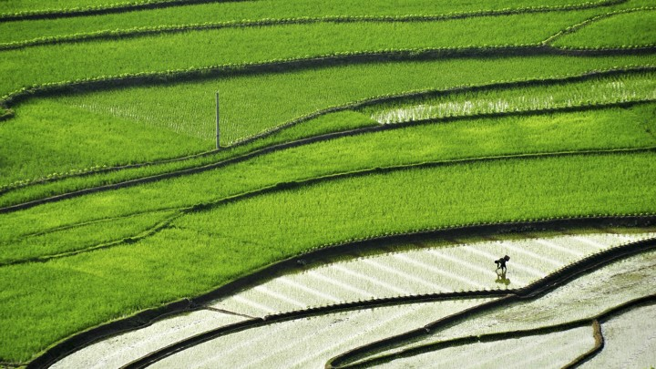 Archaeologists Find Evidence Of The First Rice Ever Grown