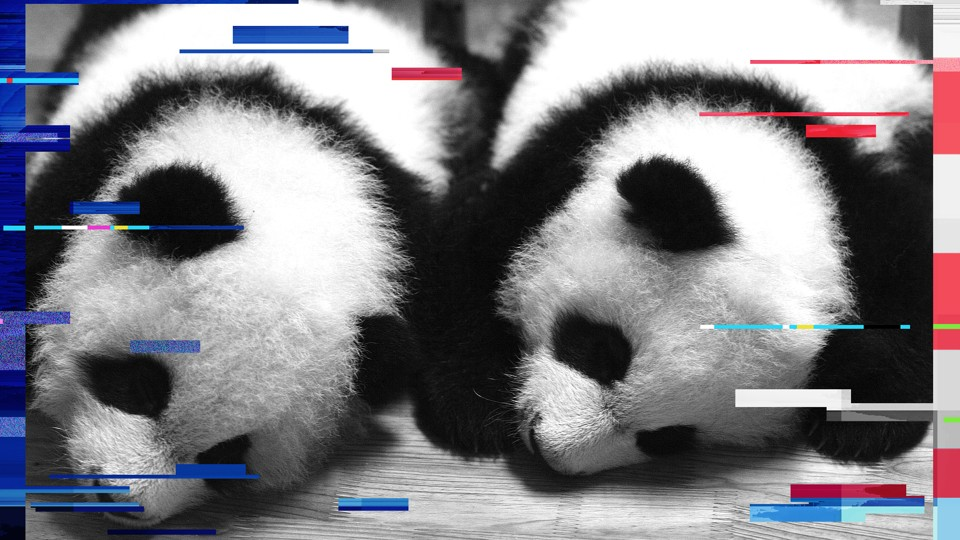 A pair of 100-day old panda twins are seen at the Chengdu Giant Panda Breeding Center, in 2007.