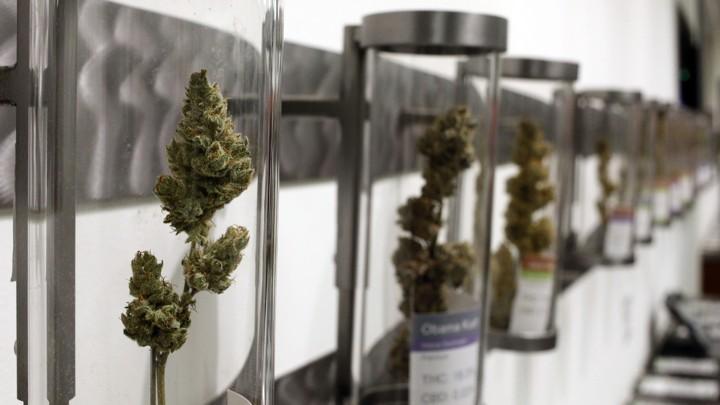 Does Marijuana Legalization Increase Pot Smoking? - The Atlantic
