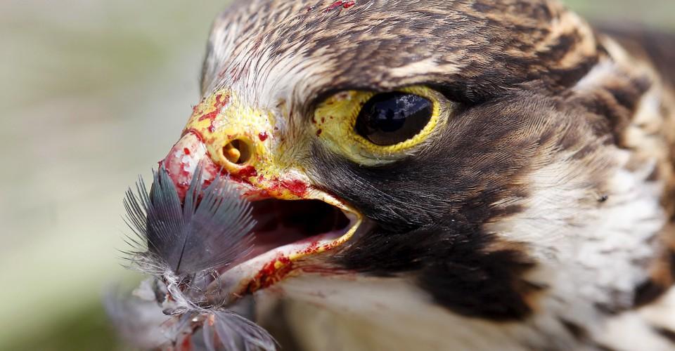 Arctic Birds Crossword Clue and Solver  Crossword Solver