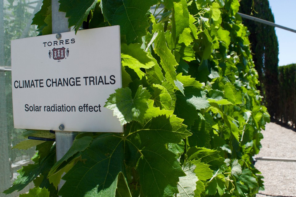"A sign that says ""CLIMATE CHANGE TRIALS: Solar radiation effect"" posted next to grapevines in a vineyard in Catalonia."
