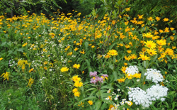 An assortment of wildflowers growing