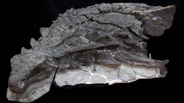 Hookup of rocks fossils and geologic events answers