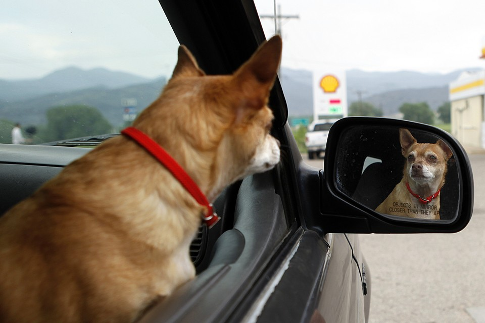 Can Dogs Recognize Themselves In Mirrors