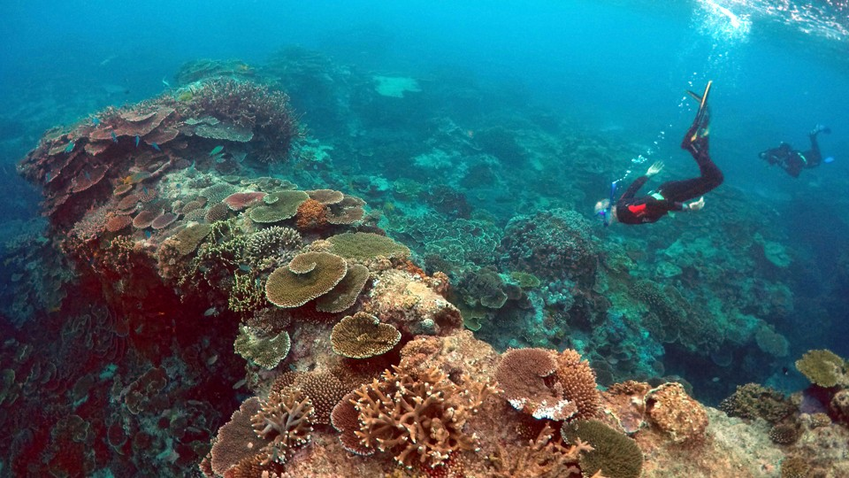 A coral reef with snorkelers