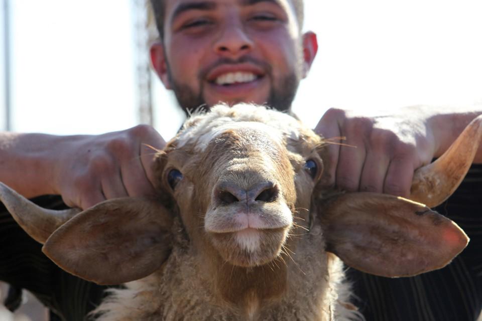 A man carries a sheep at a livestock market.